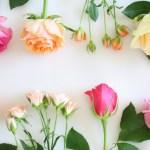 バラのフレーム