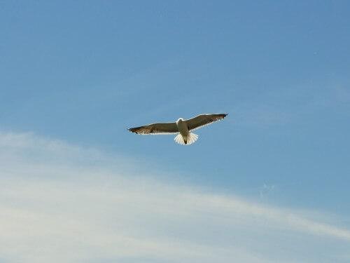 空をとぶ鳥