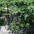 ヨンドシーの株主総会会場の外