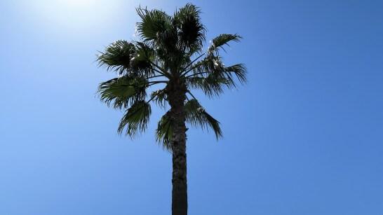 舞浜の椰子の木