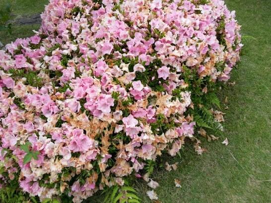 界伊東の日本庭園の花2