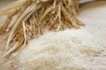 お米は正義!ふるさと納税で戴けるおすすめの米まとめ