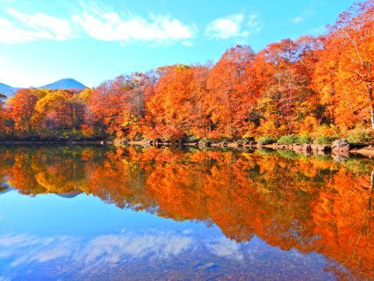 新潟の妙高高原の仙人池