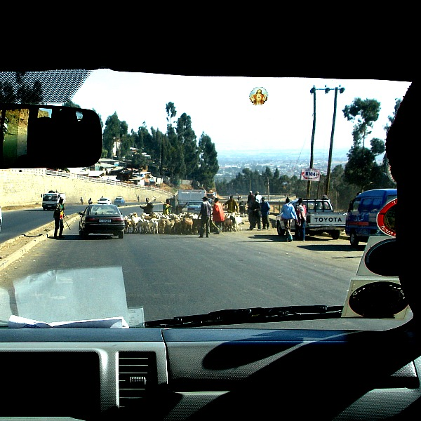 Sheep in the road in Ethiopia