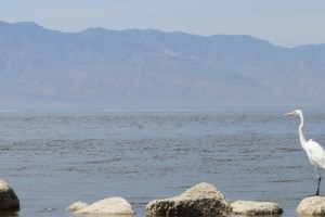 Salton Sea Rec Area Mar 2012 #21