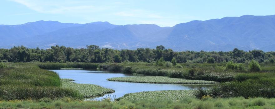 Prado wetlands