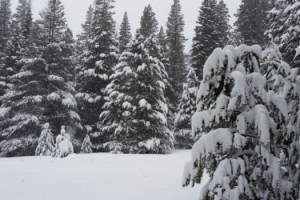 DWR Snow Survey Feb 2