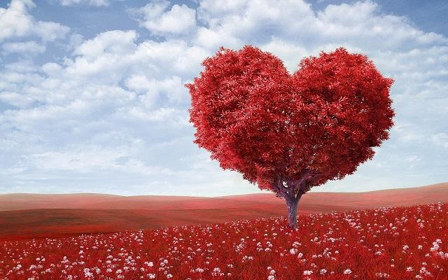 сердце 640