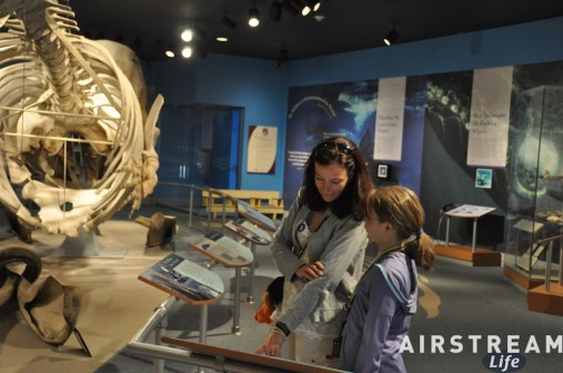new-bedford-whaling-museum.jpg