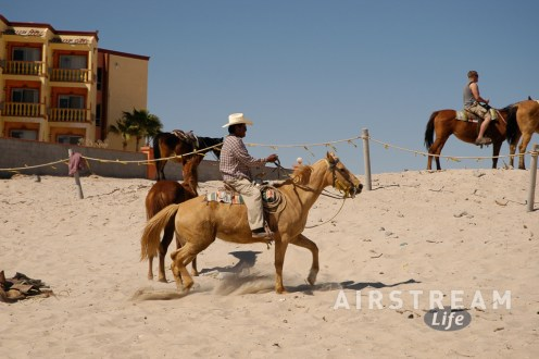 Mexico horses on beach