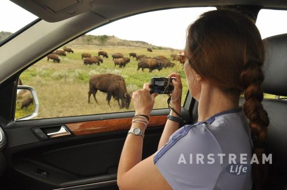 TRNP bison photography