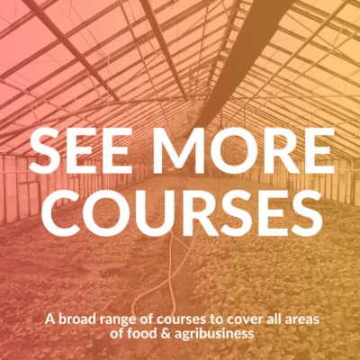 see-more-courses
