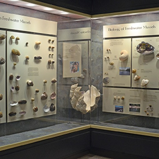 EXHIBITS_MusselsCase