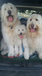The Three Doods