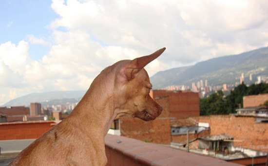 Jacob taking in the view from our balcony in Envigado.