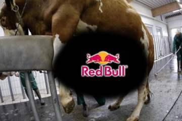 redbull-power