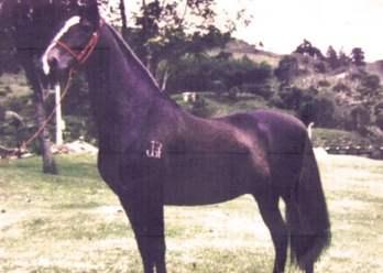 tupac_amaru_caballo