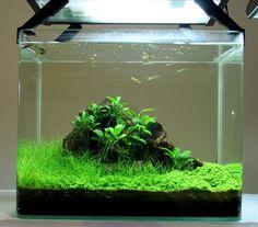 nano tank more aquariums stuff nano aquariums 640 564 pixel aqua