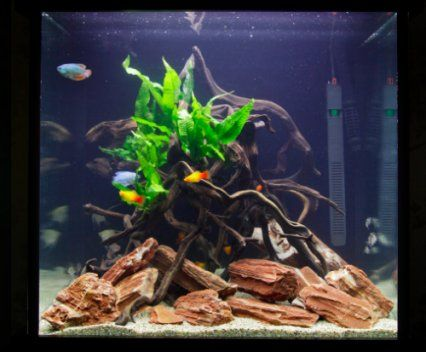 How to set up a low maintenance cube shaped aquarium