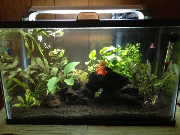 10 Gallon Betta Tank | Aquarium | Pinterest
