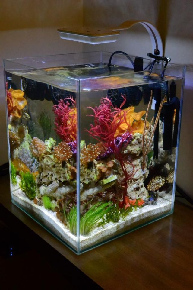 5 gallon fish tank ideas tetra aquarium starter kit 5 for Fish stores in ma