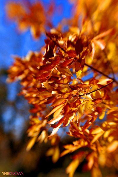 Scenery Wallpaper: Fall Foliage Iphone Wallpaper