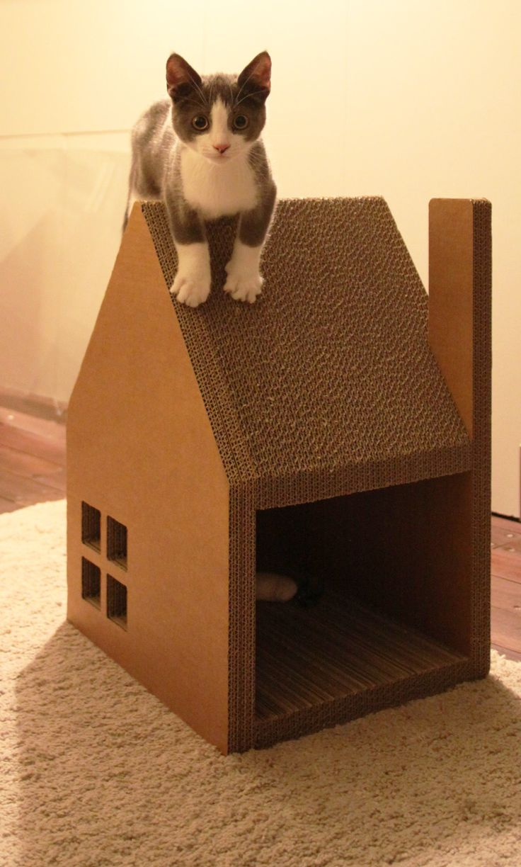 Fullsize Of Cardboard Cat House