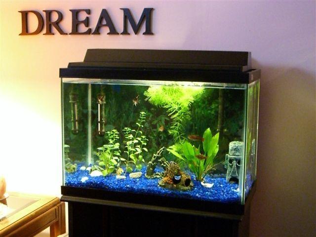 Fish tank 25 gallon my 25 gallon tank freshwater for Petsmart fish tanks for sale
