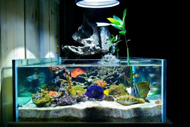 volcano tank | Aquariums & Fish | Pinterest