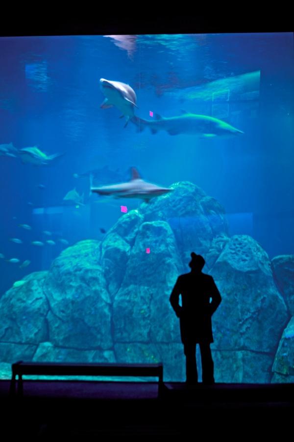 camden aquarium | It's a Jersey Thing! | Pinterest