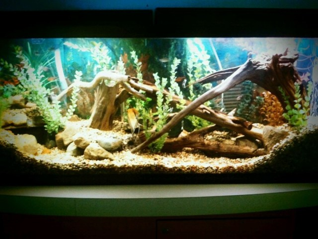 55 gallon freshwater aquarium. | Aquariums/Fish | Pinterest