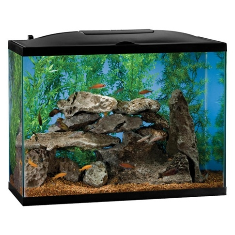 Fish Tank I'm thinking about getting for goldfish