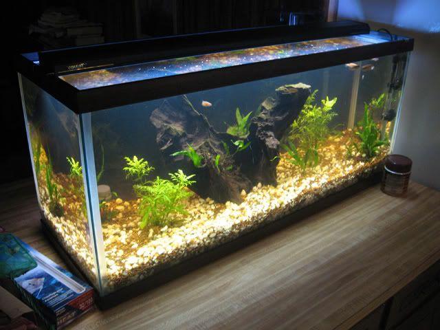 Fish Aquarium tips! | Aquarium and Fish keeping Tips | Pinterest