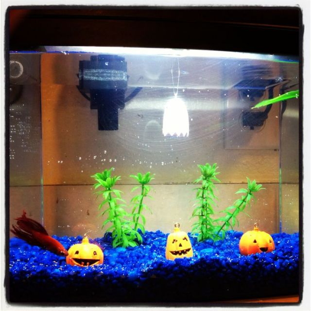 fish tank halloween decorations   Fish tank Halloween decor this makes