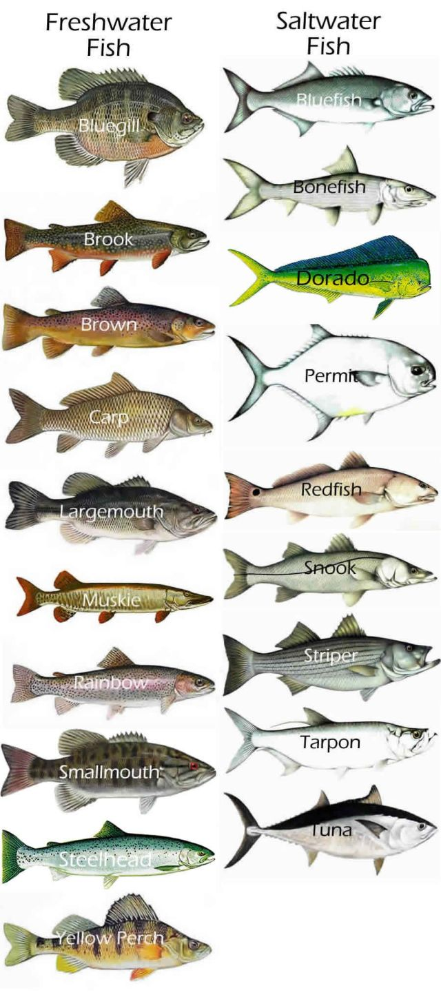 Gamefish chart   Fresh & Saltwater fish | Fishing On Kayaks