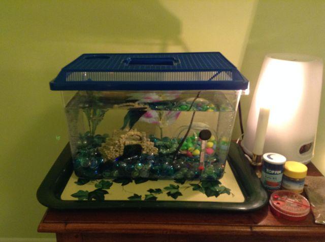 Betta fish tanks set up 10 gallon tank new betta set up for How to setup a betta fish tank