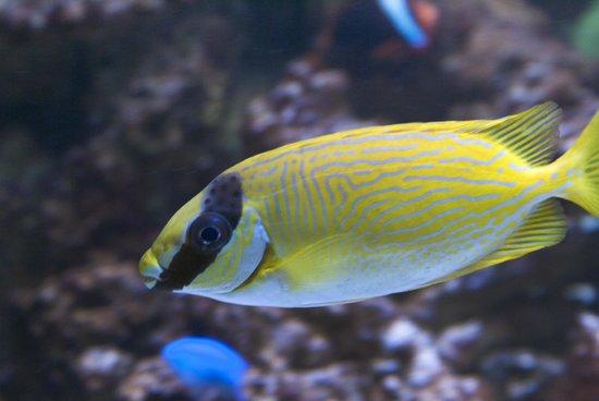 View of fish aquarium at Edmonton mall.   Picture of West Edmonton
