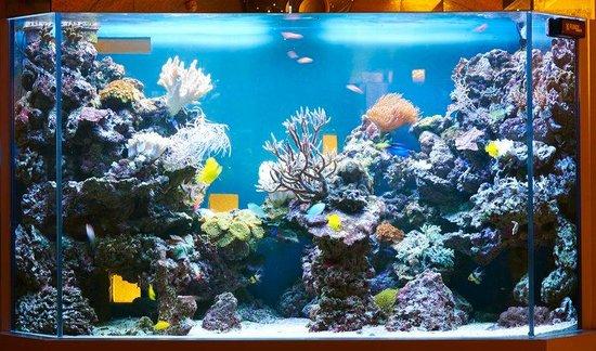saltwater aquarium reviews aquarium water reviews online shopping reviews on saltwater. Black Bedroom Furniture Sets. Home Design Ideas
