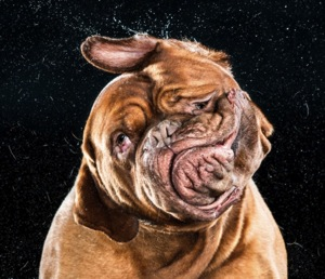 Dogggg