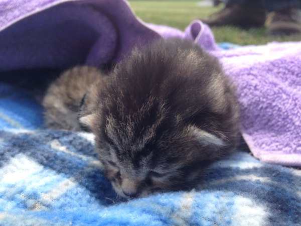 One of the 9-day old kitties. Photo: Miles O'Brien.