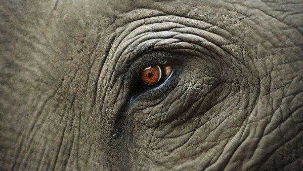 elephant-tears