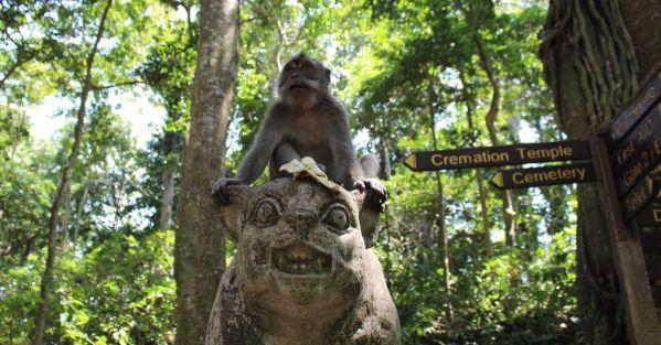 Mean Monkey in the Monkey Forest