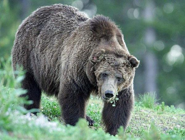 Image: Yellowstone National Park