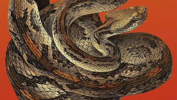 snakeymcsnakeface
