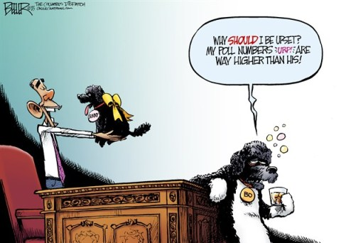 Nate Beeler - The Columbus Dispatch - Bo and Sunny COLOR - English - barack obama, approval, rating, poll, number, politics, white house, bo, sunny, dog, washington, pet
