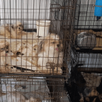Seized dogs quarantined after Parvovirus outbreak