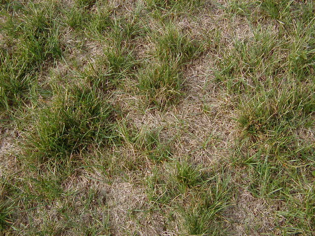 Creative Replace Lawn From Ground Ask Ground Crew Replace Lawn From Ground Ask Ground Crew Backyard Grass Redo How To outdoor Redo Backyard Grass