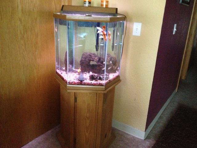 35 gallon Octagon Fish Tank   Nex Tech Classifieds