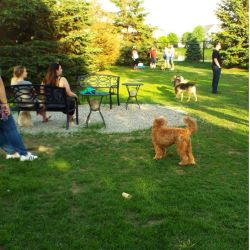 Small Crop Of Fox Valley Humane