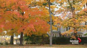 New Brunswick fall colours 'particularly vibrant' this year